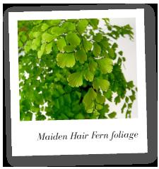 maidenhair fern care instructions